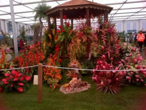 Some of the Orchids are from Smithy's GardenGrenada at Chelsea 2012