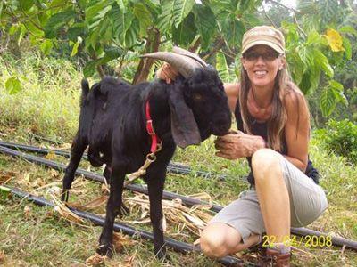 Goat at Belmont