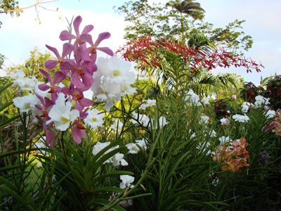 Orchids, Smithy's Garden