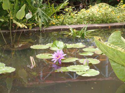 Pond St Rose Nursery