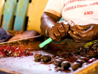 Preparing nutmegs and mace for export