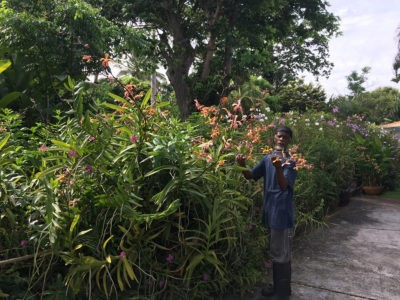 Orchid's at Smithy's Garden